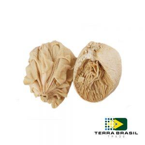 beef-omsaum-export-terra-brasil-trade