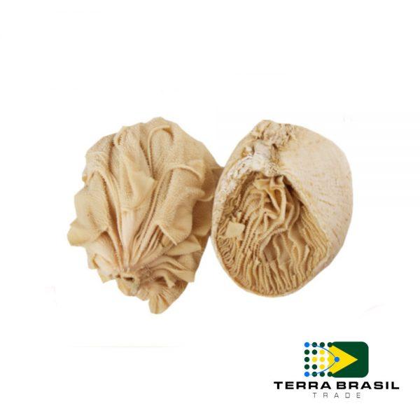 bonivo-buchinho-exportacao-terra-brasil-trade